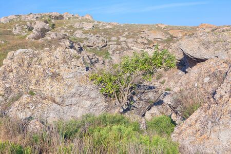 wizened: tree in the dry place