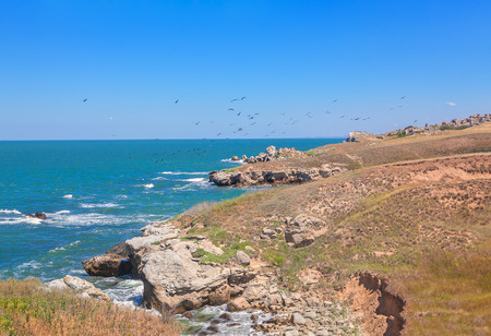 littoral: birds flying over littoral