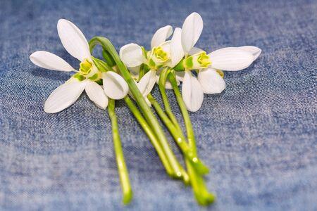 effloresce: bouquet of snowdrops