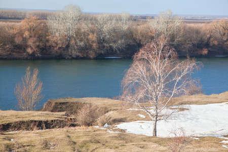 riverside tree: last winter snow melting