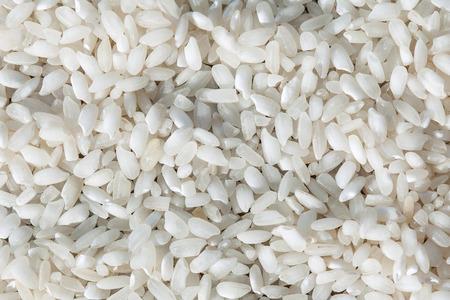 rice harvest: rice harvest texture