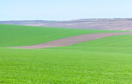plough land: plowed terrain and green field