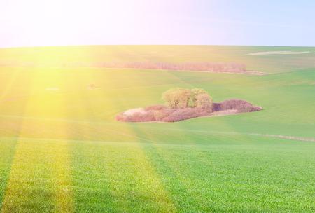 horison: beautiful natural island it green field