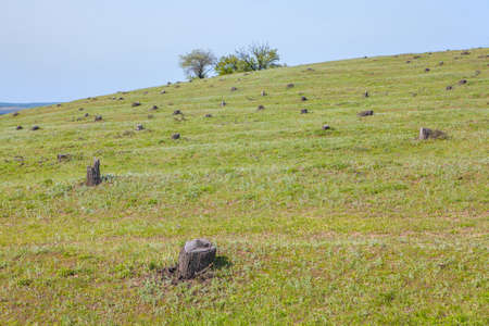 ourdoor: hill with stumps