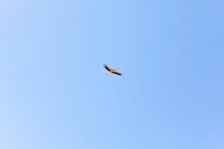 ornitology: Crane flies on blue sky