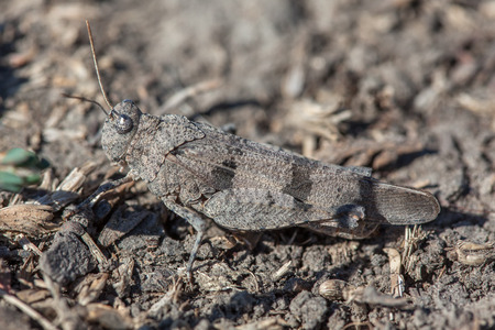 grasshopper camouflated