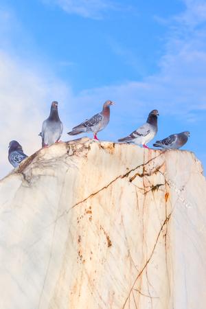 beak pigeon: doves standing on the big rock