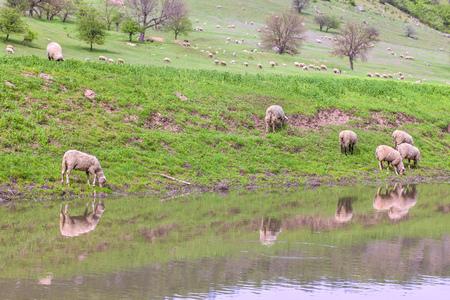 pastoral: peaceful pastoral scene
