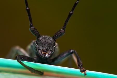 vicious: awesome black beetle portrait