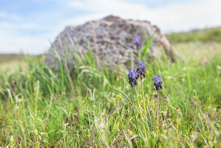 fiori di campo: fiori di campo blu vicino pietra