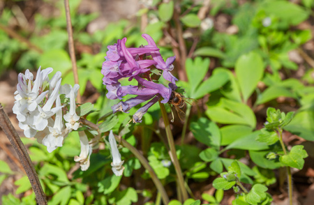 fleurs des champs: wildflowers and bee Banque d'images