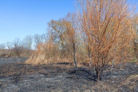 wildland after fire