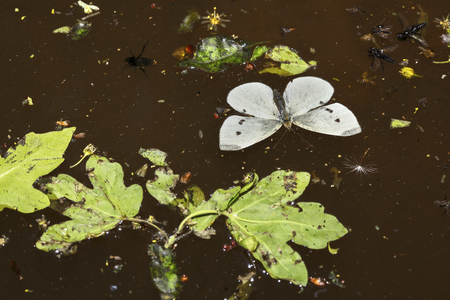 insects on water surface Stock Photo