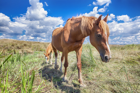 portret van rood paard en veulen Stockfoto