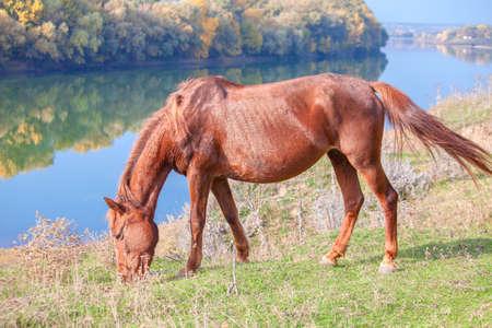 chestnut horse on the riverside Stock Photo