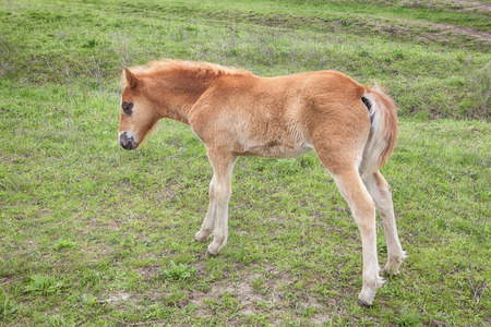 young foal on the meadow