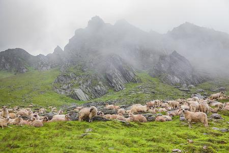peacefull: fog over mountain and sheep Stock Photo