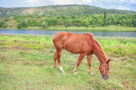 red young horse on the meadow Stock Photo