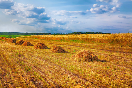 rustic field with hay