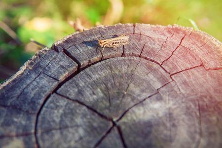 cricket on tree trunk