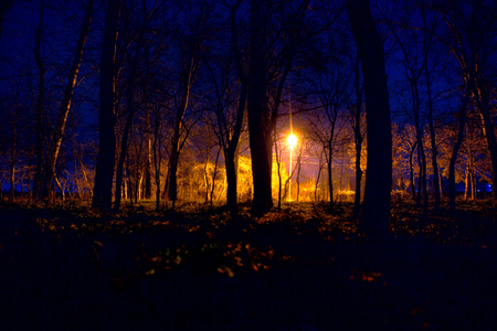 light in night forest