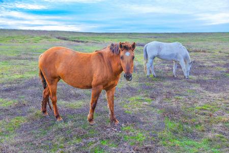 two wild horses Stock Photo