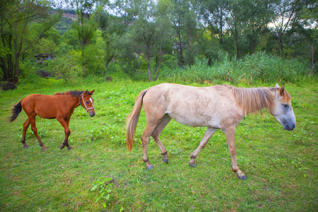white mare and brown foal