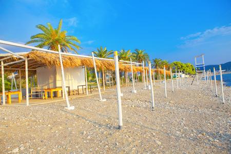 green palms on empty exotic beach