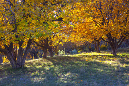 walking through autumnal park with yellow trees
