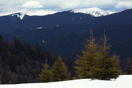 scenery with snowy mountains and fir trees