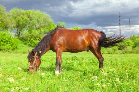 mare on pasture Imagens