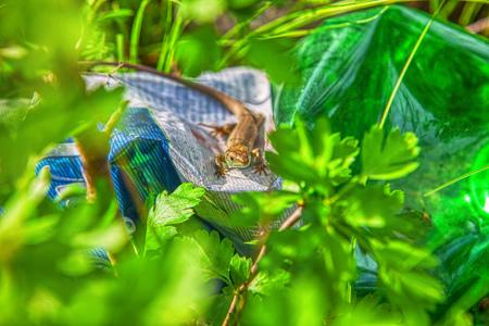 lizard in green plants