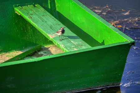 little bird standing on the wooden boat Standard-Bild - 117376990
