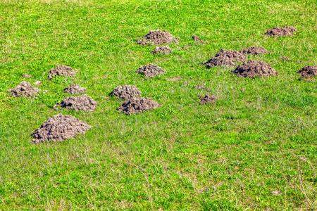 molehill on the green meadow