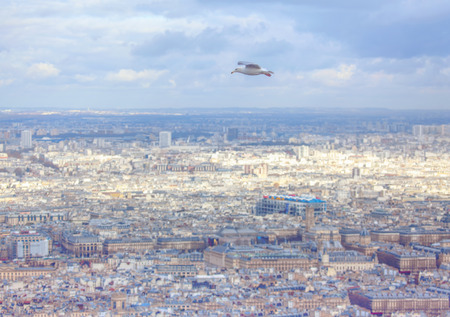 Seagull flying over the city , aerial view of Paris