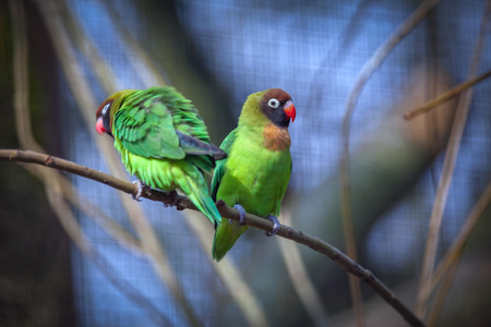 two funny parrots standing on a branch