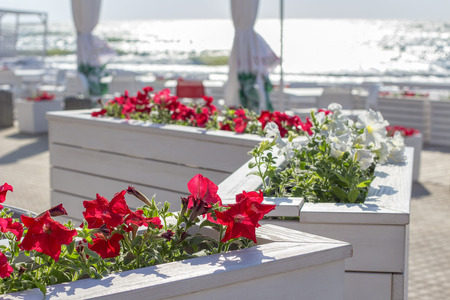terrace with flowers on the seaside