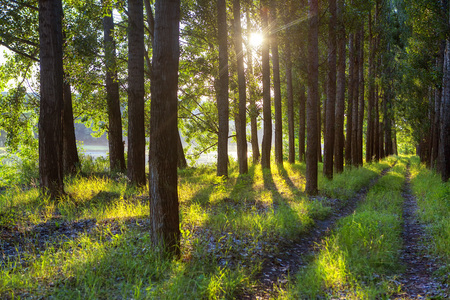 sunlight through the trees in the summer forest