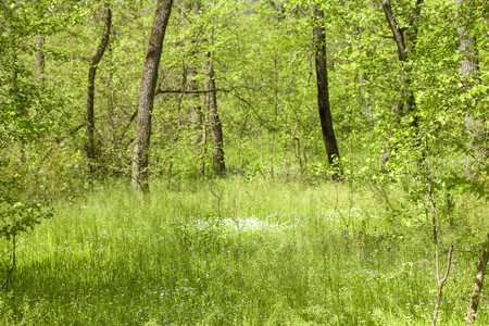 green forest nature in the spring
