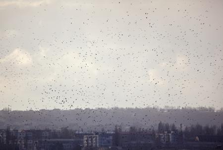 flock of birds flying over the city 版權商用圖片