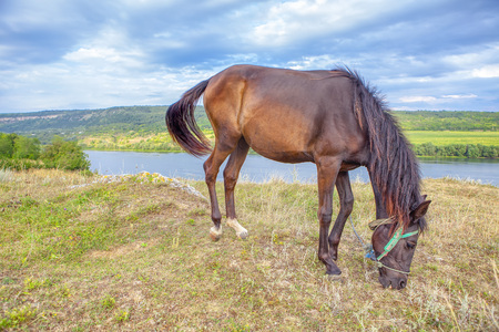 brown domestic horse grazing on the river shore