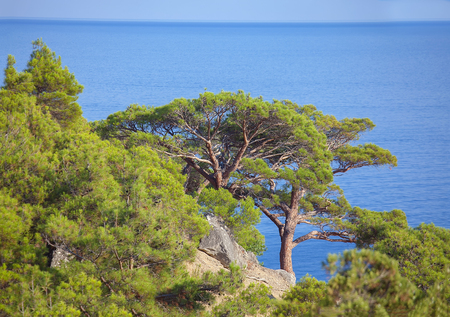 exotic trees growing near the sea