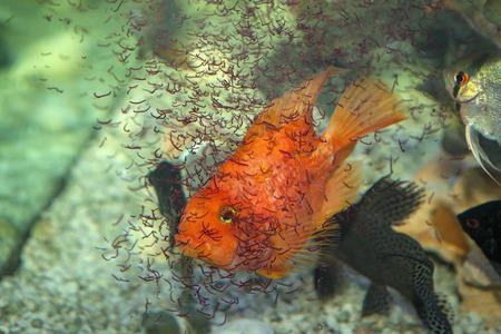 Aquarium fish food and nutrition