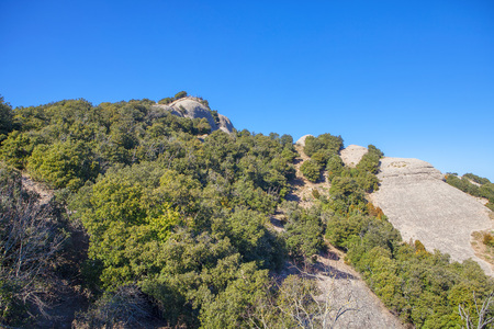 green trees growing on the rocky cliff