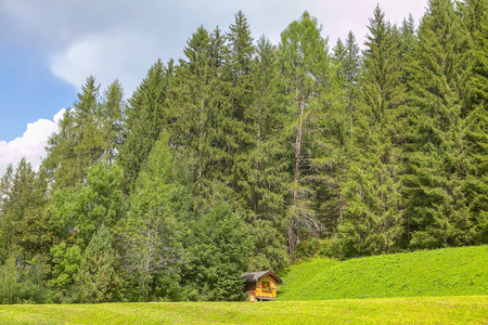 log cabin in the coniferous forest