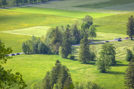 beautiful green meadow with coniferous trees