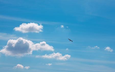 bird flying high in the blue sky