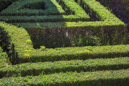 labyrinth made of green bush