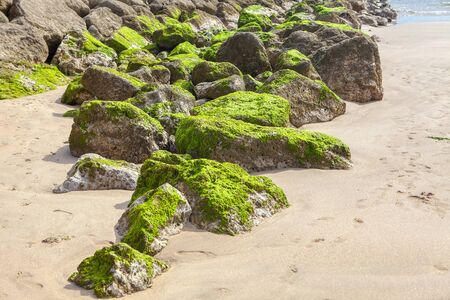natural rocks covered by moss on the ocean shore Banco de Imagens