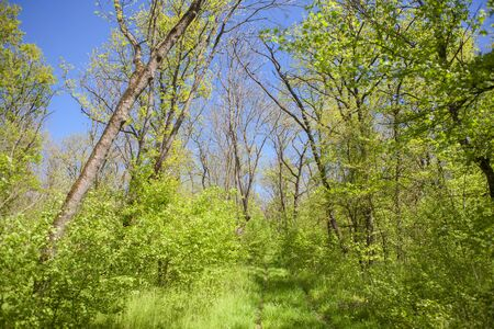 fresh spring nature with green trees